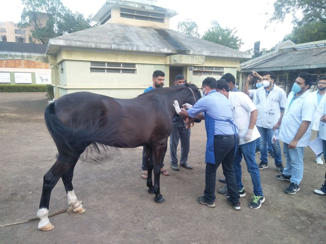 HORSES BEING INOCULATED BY A PANEL OF VETERINARY DOCTORS_1